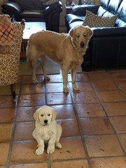 Chance and Kodi