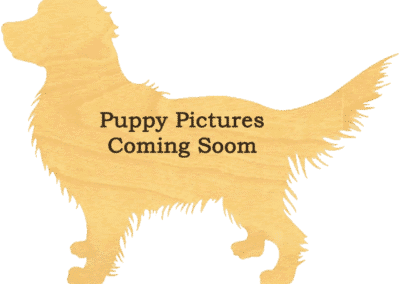 Puppy pictures coming soon.