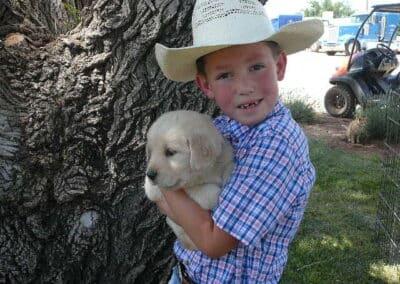Golden Retriever pup